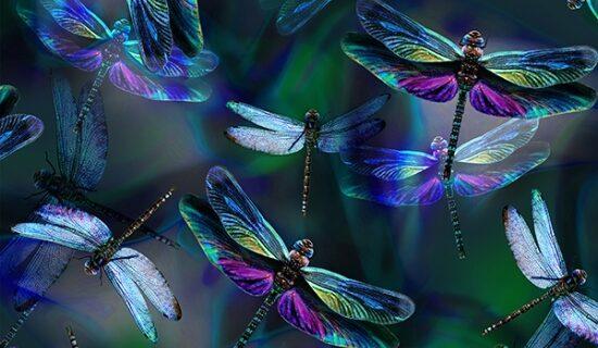108″ WIDEBACK- Hoffman Dragonfly Dream
